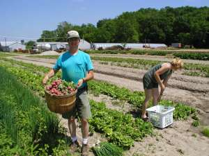 Phil and Linda Gathering Radishes, Green Onions and Green Boston (Boston/Bib lettuce)